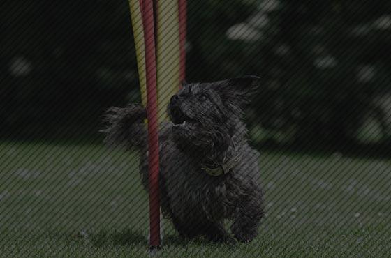 PIXIO for agility