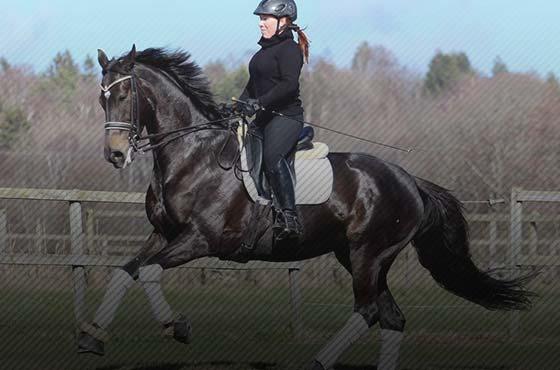 PIXIO camera automatique pour l'équitation